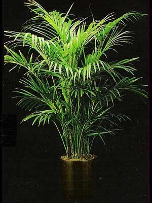 low light indoor trees indoor plants gallery the potted plant scottsdale