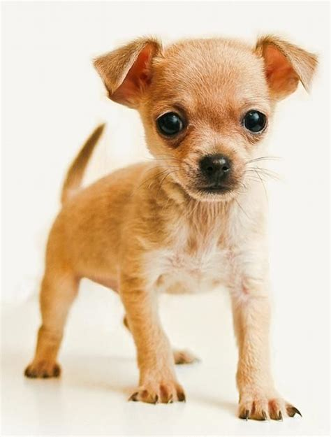 google images puppies puppies google search too cute pinterest