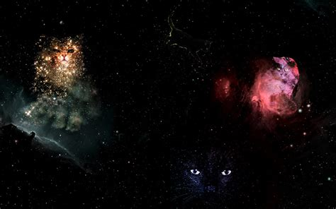 space cat wallpaper tumblr space cat tumblr backgrounds wallpapers gallery