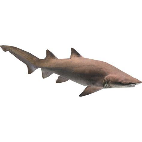 sand tiger shark zerosvalmont zt  library