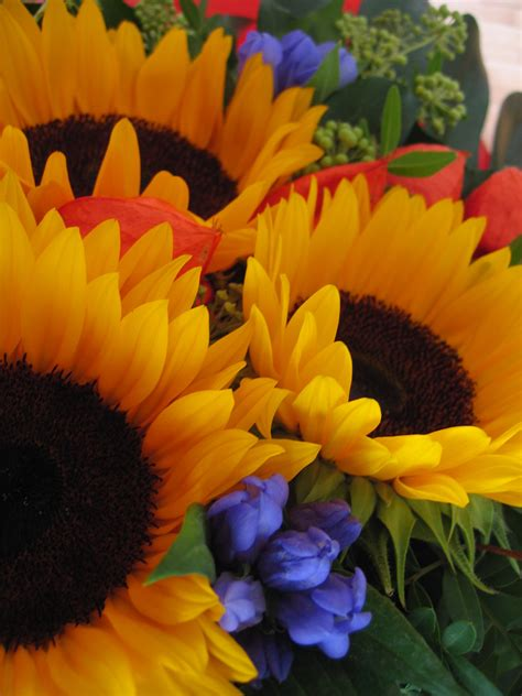 cerco immagini di fiori foto di fiori immagini