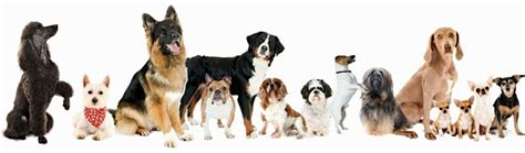 dog training house training professional dog obedience training including behaviour