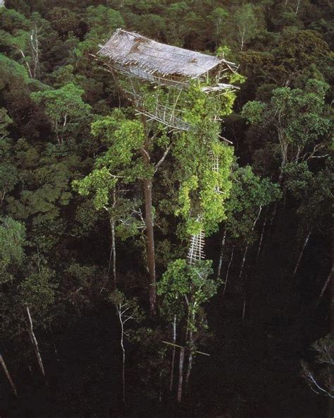 korowai treehouse the lost treehouse tribes of the rainforest nessy chic