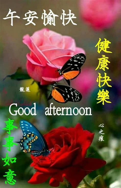 image   chua  good afternoon  chinese afternoon