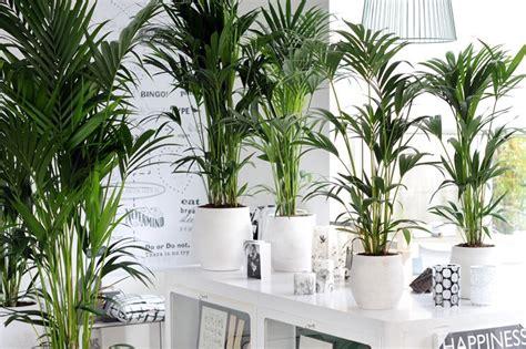 piante interne piante da interni piante appartamento piante da
