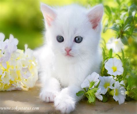 wallpaper whatsapp cats cute cats images for whatsapp dp wallpaper images