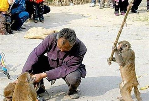 imagenes de animales impactantes 10 impactantes ataques de animales de la ternura al enojo