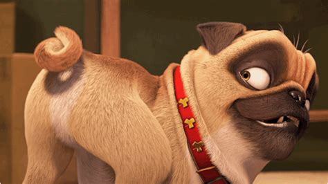 the nut pug the nut exclusive tv spot is packed with and nutty