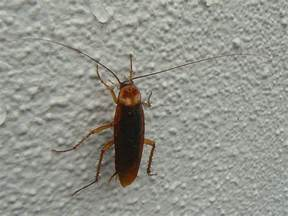 roaches in house