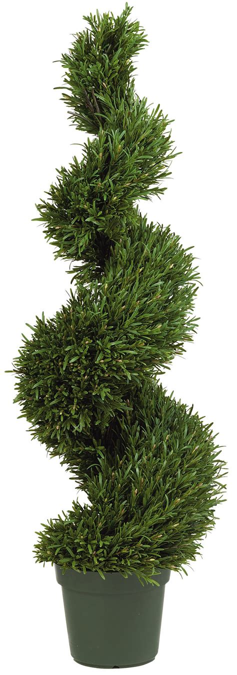 fresh real topiary trees homesfeed