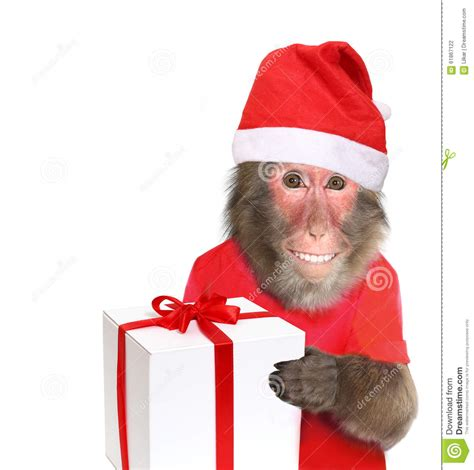 monkey santa monkey with gift stock photo image 61867122