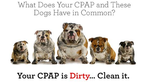 cpap for dogs some tips and tricks to properly clean your cpap supplies the cpap times