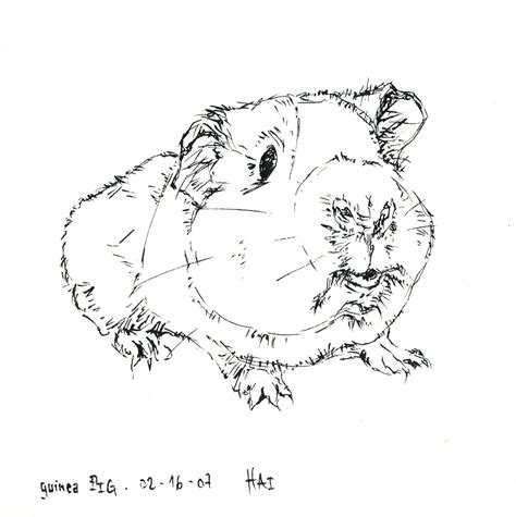 coloring page guinea pig free coloring pages of guinea pig