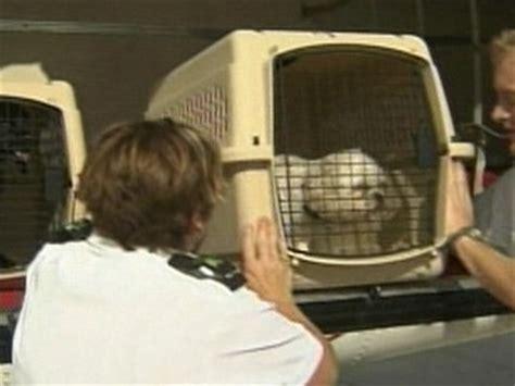 pet travel top pet friendly airlines abc news