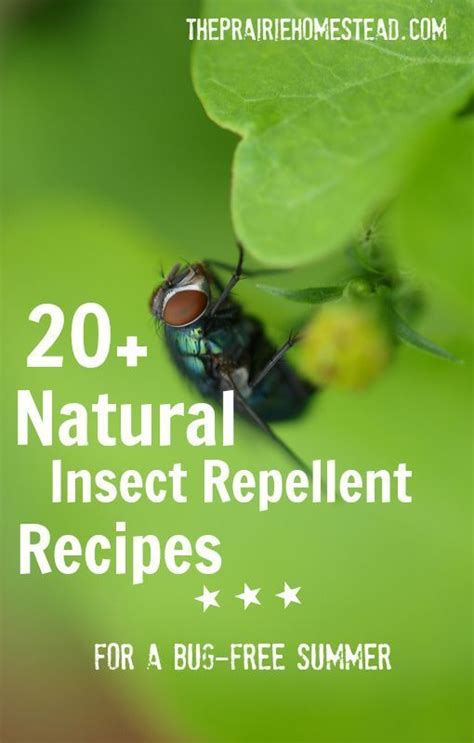 20 homemade insect repellent recipes gardens bug spray