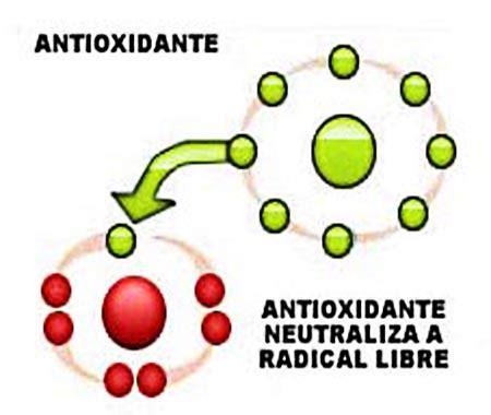 imagenes de radicales libres y antioxidantes los antioxidantes