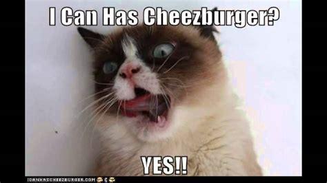 How To Make A Grumpy Cat Meme - grumpy cat memes youtube
