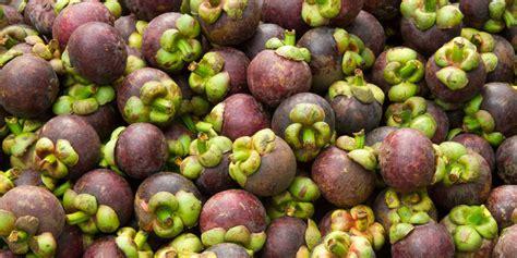 manggis asal banten tembus pasar asia hingga eropa