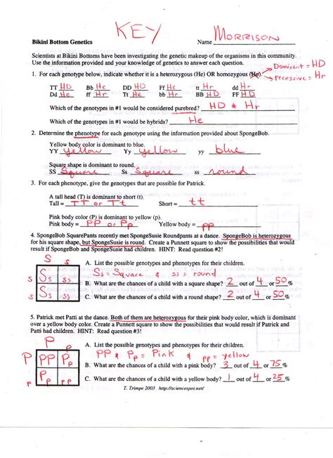 Genetics Worksheet Answers by Bottom Genetics Answers