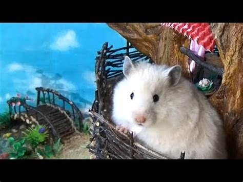 Tree House Hamster hamster in a diy sylvanian families tree house hamster