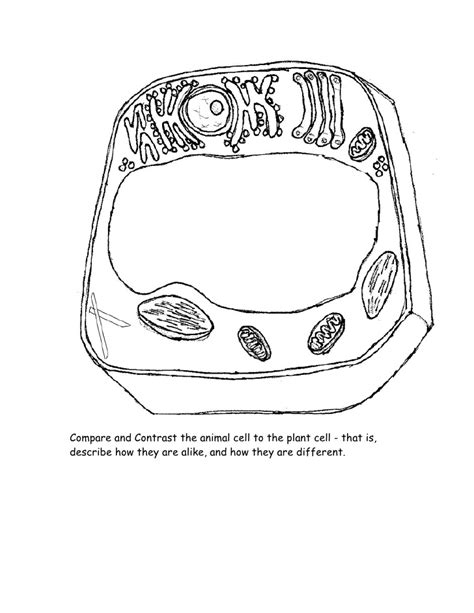 plant cell coloring biology plant cell coloring