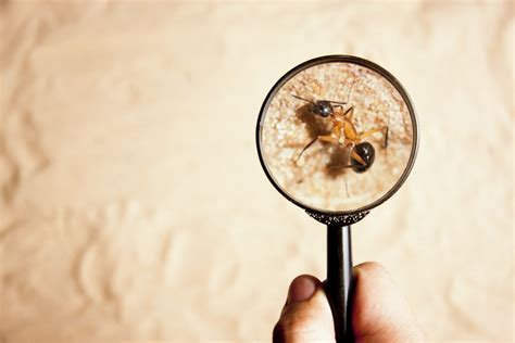 How To Make A Magnifying Glass Out Of Paper - how does a magnifying glass make things appear bigger