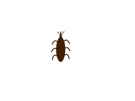 long bugs in bathroom tiny bugs in house bathroom brightpulse us