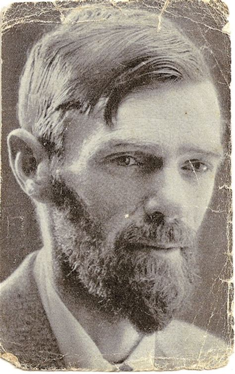 d h lawrence and 0141441550 mohrs freundschaft mit d h lawrence