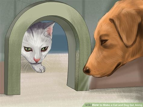 how to a cat and to get along how to make a cat and get along 14 steps with pictures
