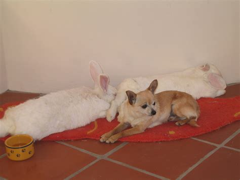 puppies and bunnies when fido met thumper dogs and rabbits