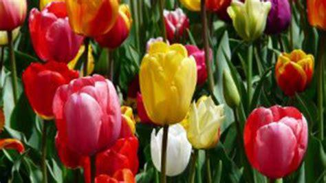 foto fiori matrimonio i fiori pi 249 belli per un matrimonio in primavera