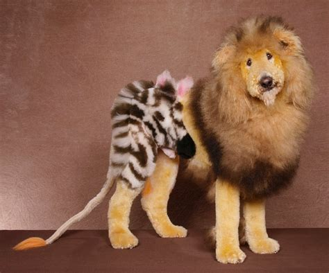 dogs like kandeej how to dye your like a tiger or oh my