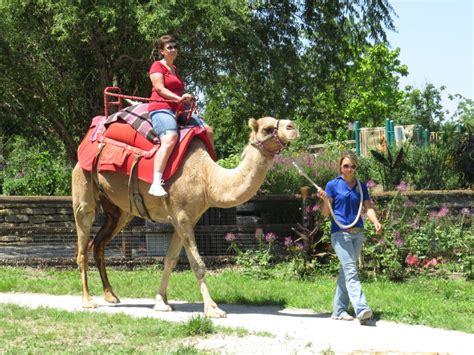 boat rides in kansas city take a boat ride a camel at the kansas city zoo the