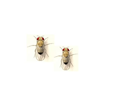 fruit fly trap  home easy  easy