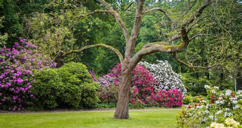 A Visit To A Botanical Garden 25 Best Botanical Gardens To Visit On Your Weekend Getaway