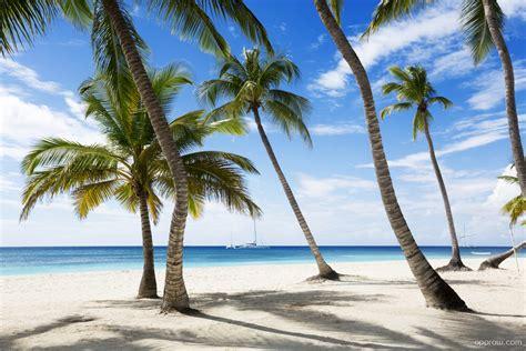 tropical palm trees tropical palm trees wallpaper palm tree hd