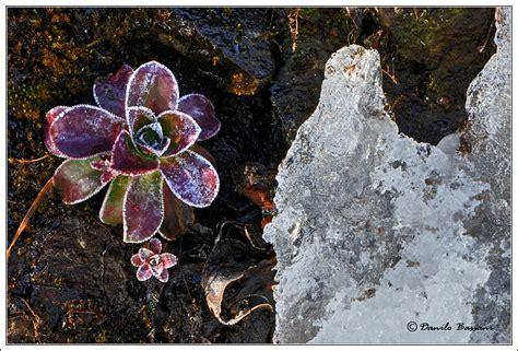 fiori di ghiaccio forum nikonclub it gt fiori nel ghiaccio