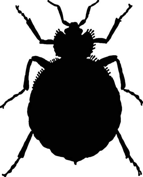 Ie8 Outline Bug by Black Bug Clip Cliparts