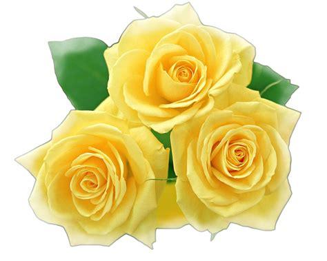 imagenes rosas variadas 174 colecci 243 n de gifs 174 im 193 genes de flores variadas
