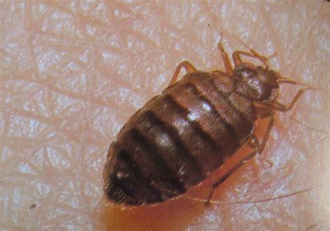 protect  storage unit  bed bugs