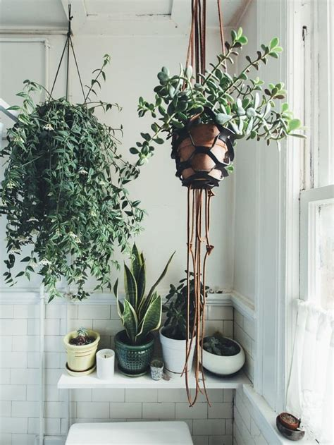 easy apartment plants happy healthy jade plants tips for growing easy care