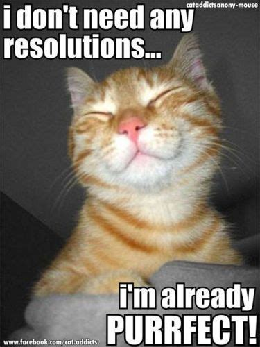 New Cat Meme - happy new year cat memes for the year 2018 to share with