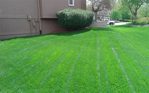 Photo Gallery Pro Turf Lawn Service Pro Turf Landscaping