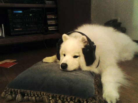 why is my puppy so tired 12 reasons why my is my