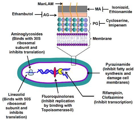 anti tubercular agents   drug targets current