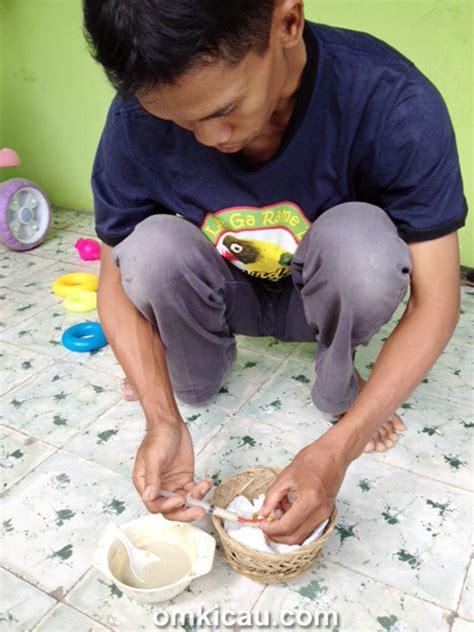 Ayam Kate Anakan om muda gunawan gunakan ayam kate untuk tetaskan telur
