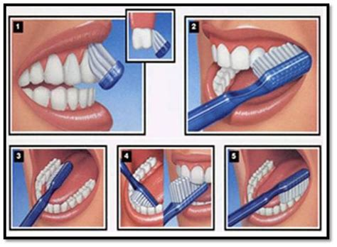 Tempat Sikat Gigi Toothbrush Holder Tooth Style clean teeth are youthful looking teeth penelope whiteley