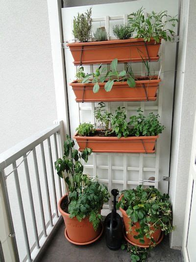 A Vegetable Garden On A Small Balcony Hanging Planters Hanging Vegetable Garden