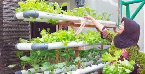 menanam hidroponik rumahan menjalankan bisnis tanaman hidroponik di rumah
