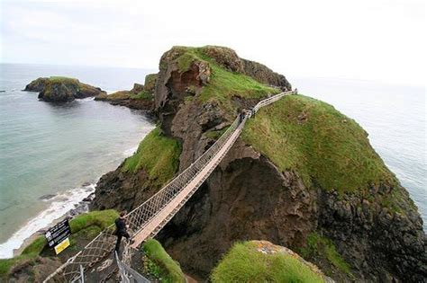 Monkey Chandelier Amazing Creativity Carrick A Rede Bridge Ireland